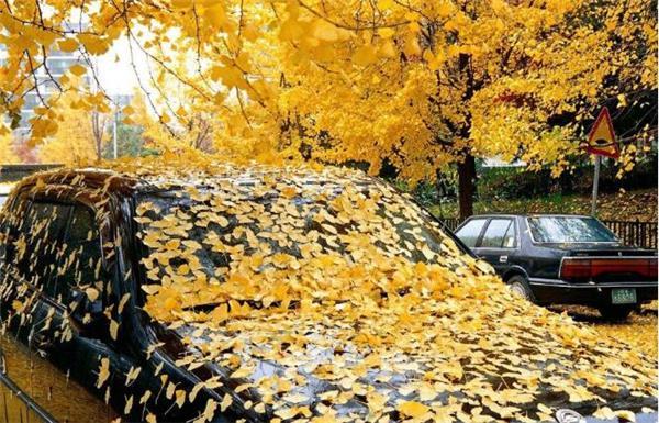 一片落叶,也能让你的爱车毁容!