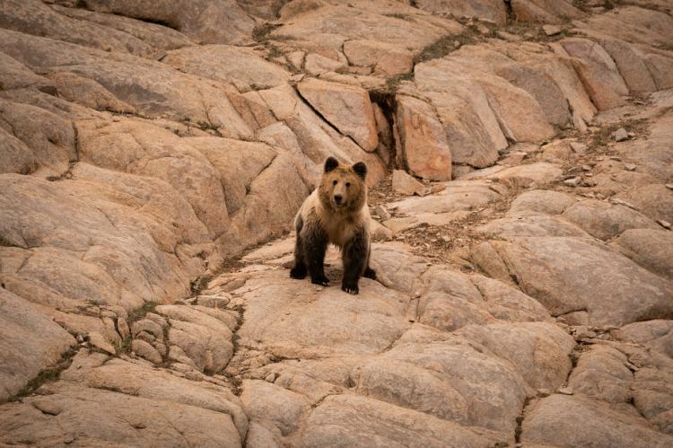 硬核实力无惧征途,长安CS75PLUS联合科考队深入阿尔金山自然保护区,探寻生命奇迹!